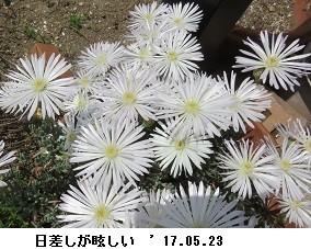 f:id:mikawakinta63:20170530142750j:image:left