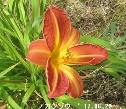 f:id:mikawakinta63:20170627135355j:image:right