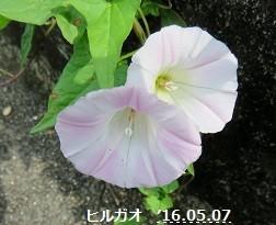 f:id:mikawakinta63:20170707143305j:image:right