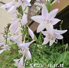 f:id:mikawakinta63:20170710150106j:image:right