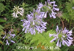 f:id:mikawakinta63:20170712161349j:image:right