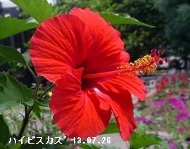 f:id:mikawakinta63:20170713133216j:image:left