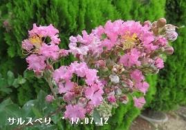 f:id:mikawakinta63:20170714184835j:image:left
