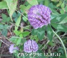f:id:mikawakinta63:20170718143112j:image:left