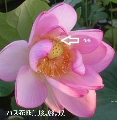 f:id:mikawakinta63:20170724155624j:image:left