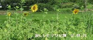 f:id:mikawakinta63:20170725140323j:image:left