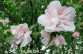 f:id:mikawakinta63:20170726150725j:image:left