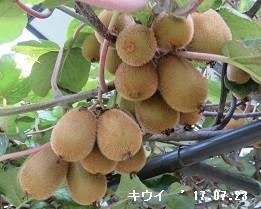 f:id:mikawakinta63:20170727122258j:image:left