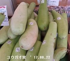 f:id:mikawakinta63:20170828160947j:image:left