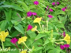 f:id:mikawakinta63:20170831130929j:image:right