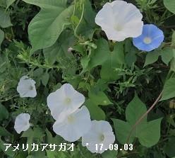 f:id:mikawakinta63:20170904145543j:image:right