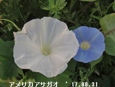 f:id:mikawakinta63:20170906153423j:image:right
