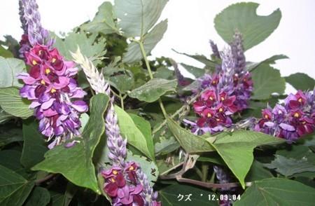 f:id:mikawakinta63:20170909141146j:image