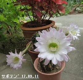 f:id:mikawakinta63:20170914151201j:image:right