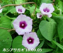 f:id:mikawakinta63:20170914155812j:image:left