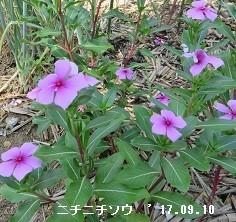 f:id:mikawakinta63:20170916212527j:image:right
