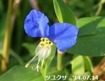 f:id:mikawakinta63:20170919155519j:image:left