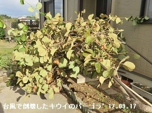 f:id:mikawakinta63:20170919172104j:image:left