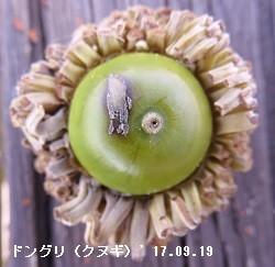 f:id:mikawakinta63:20170921140126j:image:left