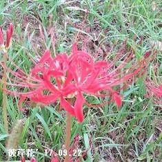 f:id:mikawakinta63:20170922161336j:image:left