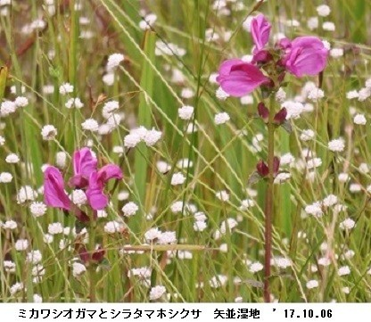f:id:mikawakinta63:20171006194144j:image