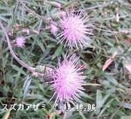 f:id:mikawakinta63:20171011205442j:image