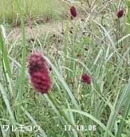 f:id:mikawakinta63:20171011210533j:image:left