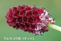 f:id:mikawakinta63:20171011210746j:image:left