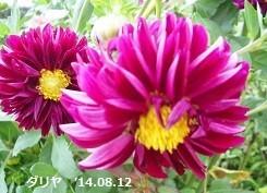 f:id:mikawakinta63:20171012134341j:image:left