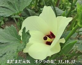 f:id:mikawakinta63:20171013135819j:image:right