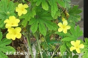 f:id:mikawakinta63:20171013150212j:image:left