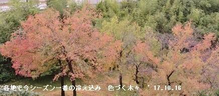 f:id:mikawakinta63:20171016133749j:image