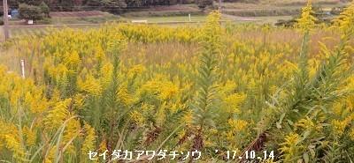f:id:mikawakinta63:20171016170956j:image