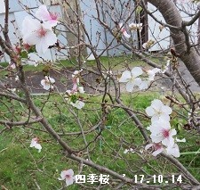 f:id:mikawakinta63:20171016171116j:image:left