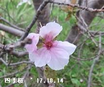 f:id:mikawakinta63:20171016171201j:image:right