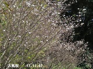 f:id:mikawakinta63:20171102214538j:image:left