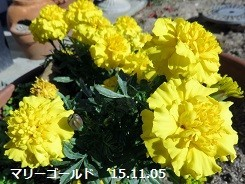f:id:mikawakinta63:20171106140723j:image:right