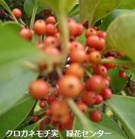 f:id:mikawakinta63:20171106170946j:image:left