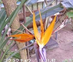 f:id:mikawakinta63:20171109165520j:image:right