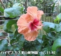 f:id:mikawakinta63:20171109165632j:image:left