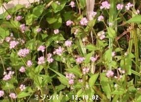 f:id:mikawakinta63:20171115130941j:image:right