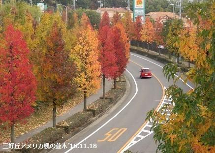 f:id:mikawakinta63:20171116141535j:image