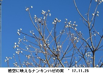 f:id:mikawakinta63:20171128151147j:image:left