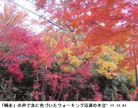 f:id:mikawakinta63:20171201201941j:image