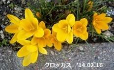 f:id:mikawakinta63:20180227125819j:image:right