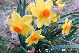 f:id:mikawakinta63:20180315135445j:image:left