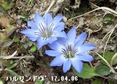 f:id:mikawakinta63:20180316144901j:image:right