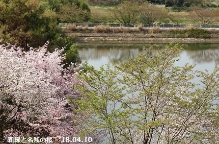 f:id:mikawakinta63:20180411102238j:image