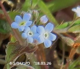 f:id:mikawakinta63:20180411162443j:image:left