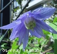 f:id:mikawakinta63:20180412143646j:image:right